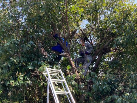 植木伐採サムネイル